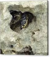 Crab Hiding In A Rock On The Seashore Canvas Print