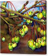 Crabapple Dew Canvas Print