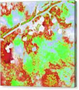 Crabapples Series #4 23 Canvas Print