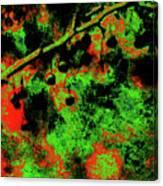 Crabapples Series #4 24 Canvas Print