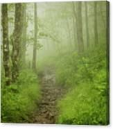 Craggy Gardens Trail Canvas Print