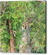 Craggy Tree For Will Canvas Print
