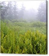 Cranberry Glades Early Morning Canvas Print