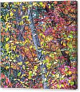 Cranberry Orange Canvas Print