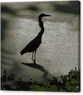 Crane Reflections Canvas Print