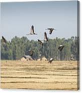 Cranes Over Ethiopia Canvas Print
