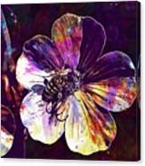 Cranesbill Flower Close Bee Insect  Canvas Print