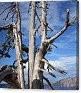 Crater Lake Tree Canvas Print