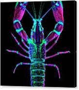 Crawfish In The Dark - Rosegreen Canvas Print