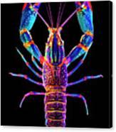 Crawfish Inthe Dark Allsat Canvas Print