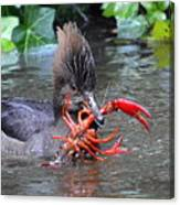 Crayfish? Canvas Print