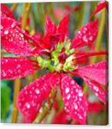 Crazy Dewy Red Flower Canvas Print