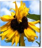 Crazy Sunflower Look Canvas Print