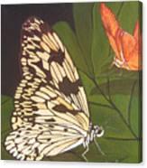 Cream And Orange Butterflies Canvas Print