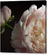 Cream And Pink Canvas Print