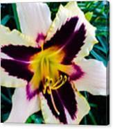 Cream And Purple Lily Macro Canvas Print