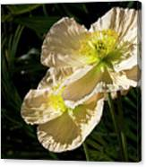 Creamy Poppies Canvas Print