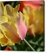 Creamy Yellow Tulip Canvas Print