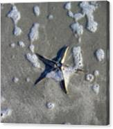 Creatures Of The Gulf - A Fallen Star Canvas Print