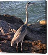 Creatures Of The Gulf - Ever Watchful Canvas Print