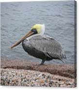 Creatures Of The Gulf - The Squatter Canvas Print