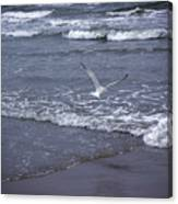 Creatures Of The Gulf - Tranquility Canvas Print