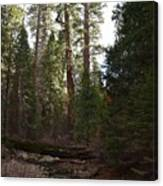 Creek And Giant Sequoias In Kings Canyon California Canvas Print