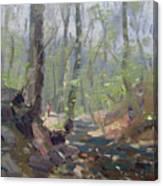 Creek At Lockport Natural Trail Canvas Print