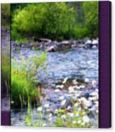 Creek Daisys Canvas Print