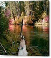 Creek Fall Canvas Print