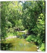 Creek In A Forest Canvas Print
