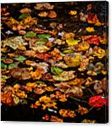 Creek Leaves Canvas Print