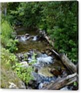 Creek On Mt. Spokane 1 Canvas Print