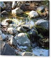 Creek Reflections 1 Canvas Print