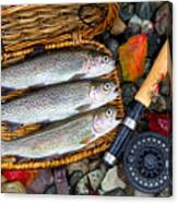 Creel With Native Trout  Canvas Print