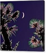 Crescent And Palms Canvas Print