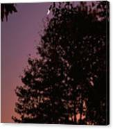 Crescent Moon And Tree Silhouette At Dusk Canvas Print