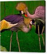 Crested Cranes Canvas Print