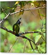Crested Finchbill 2 Canvas Print