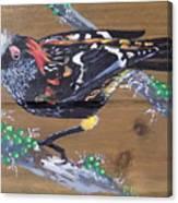 Crested Honeycreeper Canvas Print