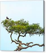 Crested Snake Eagle Canvas Print