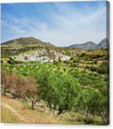 Crete Olive Grove Canvas Print