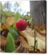 Crimson Berry Canvas Print