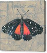 Crimson Patch Butterfly Canvas Print
