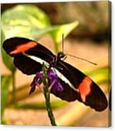 Crimson Patched Longwing 2 Canvas Print