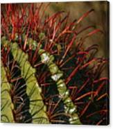 Crimson Thorns 2 Canvas Print