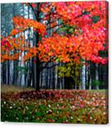 Crimson Tree Canvas Print