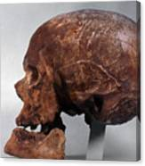 Cro-magnon Skull Canvas Print