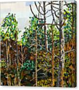 Croatan Forest 1 Canvas Print