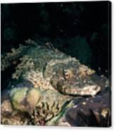 Crocodile Fish On Coral Canvas Print